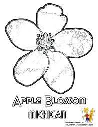 Small Picture flower Page Printable Coloring Sheets Flower Printables States