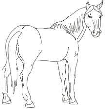 This is one of the cute horse coloring pictures featuring two horses showering coloring is a fun filled educational activity for your kids. Top 55 Free Printable Horse Coloring Pages Online