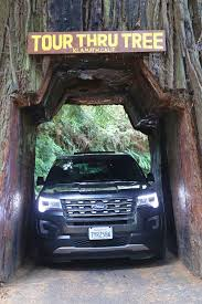 things to do for your redwood national park vacation include road trips enjoying the beach