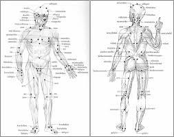 Marma Chart Pressure Points Human Body Diagram Marma Points