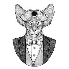 Fotka Orientální Kočka S Velké Uši Zvířecí Nošení Dvourohák