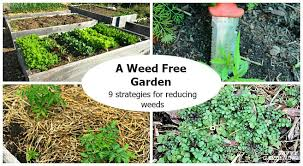a weed free garden 9 strategies for