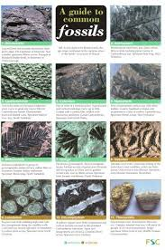 A Guide To Common Fossils Identification