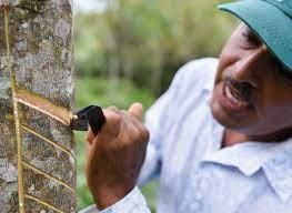 Estrategia Sectorial de la Cadena de Caucho en Guaviare, con Enfoque Agroambiental y Cero Deforestación