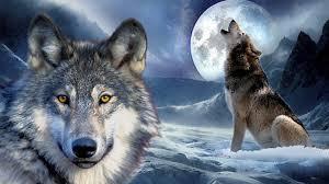 wolf howling at the moon wallpaper hd. Wonderful Wallpaper Wolves Howling Throughout Wolf At The Moon Wallpaper Hd