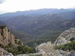Ambiente, flora e fauna | WWF Italy