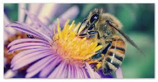 Доклад про пчёл Строение пчелы