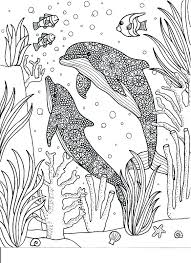 Coloring Pages Dolphin Coloring Page Of A Dolphin Dolphin Tale