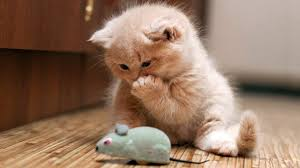 cute and funny cats and kittens video