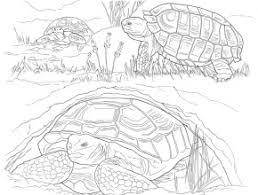 Small Picture Sonoran Desert Animals Coloring Pages Free Coloring Page Today