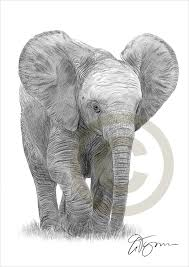 Baby Elephant Template Elephant Drawings 24 Free Printable Jpeg Png Format Download