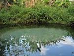 imagem de São Félix do Tocantins Tocantins n-12