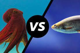 بحث جديد يسفر عن أن الأخطبوطات تحب لَكْمَ الأسماك – يونس بن عمارة