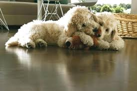 best flooring for pets. Best Laminate Flooring For Dogs And Pets Gorgeous With A