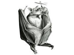 Bat Species Chart Hammer Headed Bat Facts Big Lipped Bat