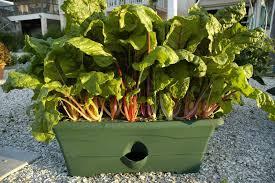 box garden. Garden Grow Box