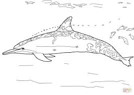 Small Picture Spinner Dolphin coloring page Free Printable Coloring Pages