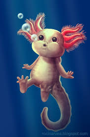 Small Picture 16 best Axolotl images on Pinterest Amphibians Salamanders and
