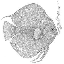 Pin By Catherine Alred On Adult Coloring Fish Coloring Page Fish