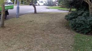 Grass Couch Lawn Care Tips Sir Walter Weed Control Couch Lawn Care