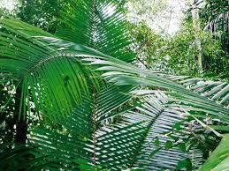 amazon rainforest tree leaves. To Amazon Rainforest Tree Leaves