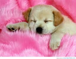 cute baby dog. Modren Cute Cute Baby Dog Wallpaper HD Inside F