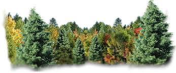 Znalezione obrazy dla zapytania gify drzewa