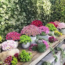 garden shows. Picture Courtesy: Facebook/Melbourne International Flower And Garden Show Shows