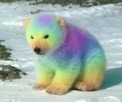 The Rainbow Bear Rome Fontanacountryinn Com