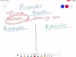 genes and proteins biology 2nd numerade