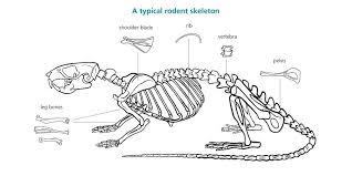 bone identification chart
