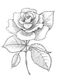 Small Picture Drawn Rose How To Draw A Rose nebulosabarcom