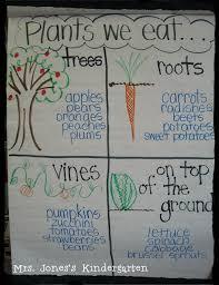 Plants Anchor Chart Kindergarten Chaos