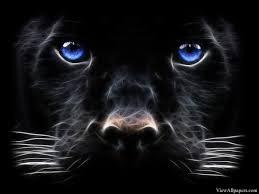 3D Black Tiger Blue Eyes
