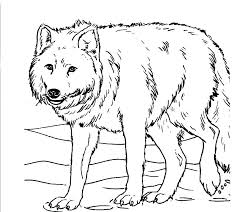 Big Bad Wolf Coloring Page Big Bad Wolf Coloring Page Free Pages Big