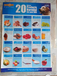 Lhasa Apso Diet Chart What Indian Food Can I Give To My Dog Quora