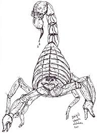 Tekening Van Een Schorpioen Getekend Door Brigit Weeda