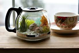 how to make your own terrarium. Brilliant How Make Your Own Coffee Pot Terrarium Intended How To