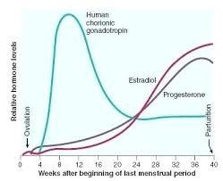 Estradiol Levels During Pregnancy Chart Hormone Levels During Pregnancy Chart Www