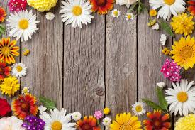 garden flowers. Garden Flowers Over Wooden Table Background. Backdrop With Copy Space Stock Photo - 60454961 P