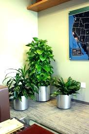Image Desk Modern Office Plants Plants For The Office Decorative Plants For Office Office Plants Decorative Plants Office Crossword Plants For The Office Modern Office Philssite Modern Office Plants Plants For The Office Decorative Plants For