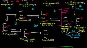 Glycolysis Part 2 Of 3 The 10 Steps Youtube