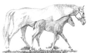 Small Picture printable horse coloring pages PICT 868724 Gianfredanet