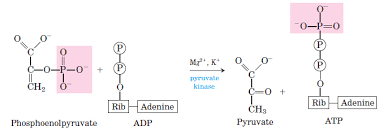 Glycolysis All Steps With Diagram Enzymes Products Energy Yield