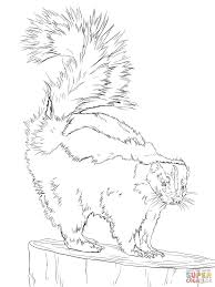 Small Picture North American Striped Skunk coloring page Free Printable