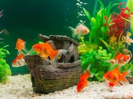 Aquarienbewohner © [luckypic] U2013 Shutterstock.com
