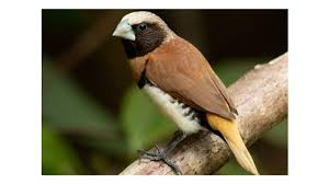 Mengapa burung ini dijuluki burung paling licik? How To Resize Images Bentuk Burung Prit Gantil Viral Today Bentuk Burung Prit Gantil Burung Pelikan Bentuk Paruhnya Panjang Dan Berfungsi Untuk Mencari Makanan Berupa Berbagi Ada 20 Gudang Lagu Suara