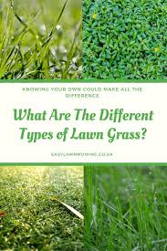 Grass Identification Chart Uk Learn About The Different Types Of Lawn Grass So You Can