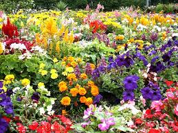 garden flowers. Pretty Flower Garden Flowers G