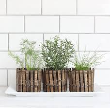 DIY Clothespin Herb Planters   Fun and Easy Indoor Herb Garden Ideas